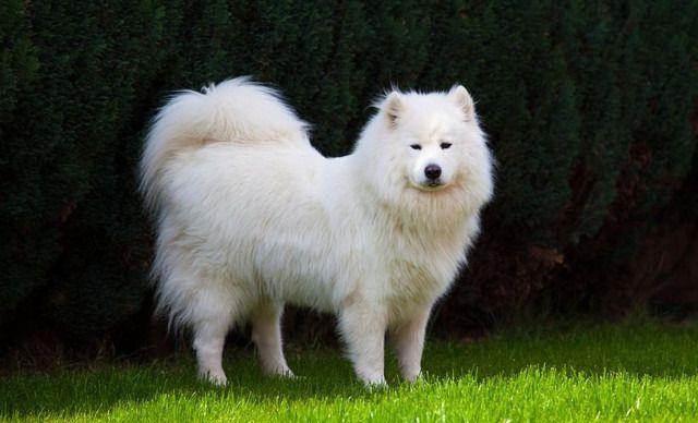 哆唻咪宠物店小型犬寄养(0-5kg),仅售8.9元!价值30元的小型犬寄养(0-5kg)1天,可升级,提供免费WiFi。
