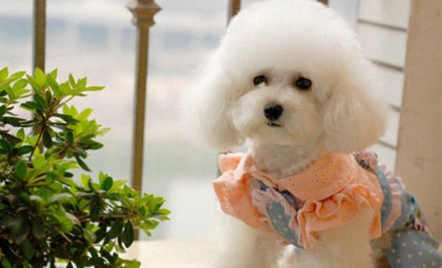 宠爱有家宠物店中型犬寄养,仅售29.8元!价值40元的中型犬寄养1天,提供免费WiFi。