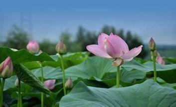 【新民市】沈阳西湖风景区-美团