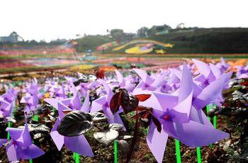 【华蓥市】百万玫瑰·梦幻花海国际风车节门票(成人票)-美团