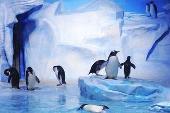 【极地海洋世界】青岛海昌极地海洋世界-美团