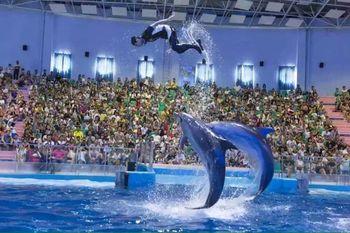 【罗源湾滨海新城】罗源湾海洋世界全套票1大1小(含海狮海豚表演+美人鱼表演)-美团
