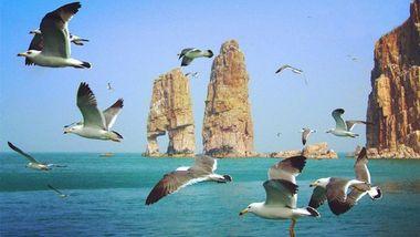 【长岛县】万鸟岛之旅成人票-美团