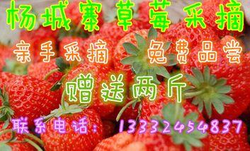 【其它】杨城寨草莓采摘一日游-美团