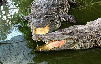 【石鼓路/集美学村】南顺鳄鱼园-美团