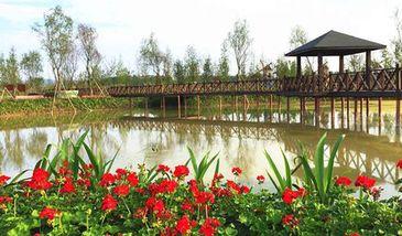【泸县】龙桥百花洲植物园-美团