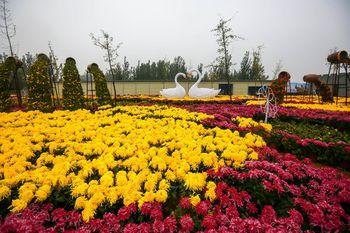 【龙亭区】中国菊园夜场门票(成人票)-美团
