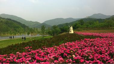 【黄陂区】木兰玫瑰园风景区-美团