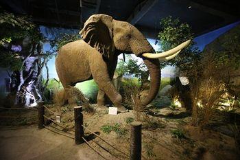 【滨海学院】青岛滨海学院世界动物自然生态博物馆门票(儿童票)-美团