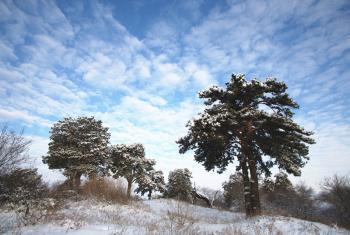 【河西】海拉尔国家森林公园门票(成人票)-美团