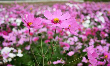 【平山】永记生态园-美团
