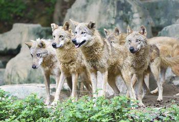 【番禺区】广州长隆野生动物世界周末\节假日\暑期儿童长者票-美团