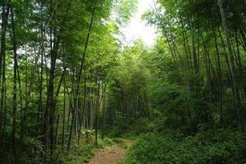 【夷陵区】西塞国森林公园—李家寨(成人票)-美团