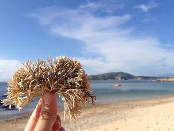 【广州出发】沙扒湾、月亮湾2日跟团游*轻松自由行、放孔愿灯-美团