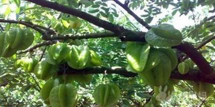 【天涯区】南天热带植物园-美团