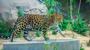 【河东区】临沂动植物园门票儿童票-美团