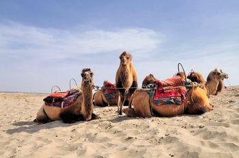 【喀什地区出发】卡拉库里湖、达瓦昆沙漠旅游风景区2日跟团游*同个地区不同景色-美团