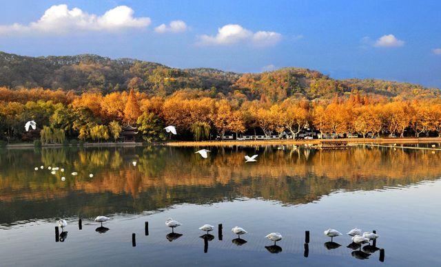 杭州西湖+西溪一日游。人赏水似镜,水映人如画,恍入梦境