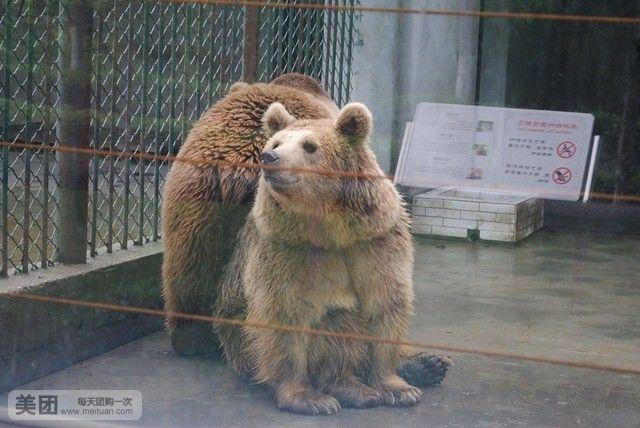 【北京泰州市动物园团购】泰州市动物园门票团购