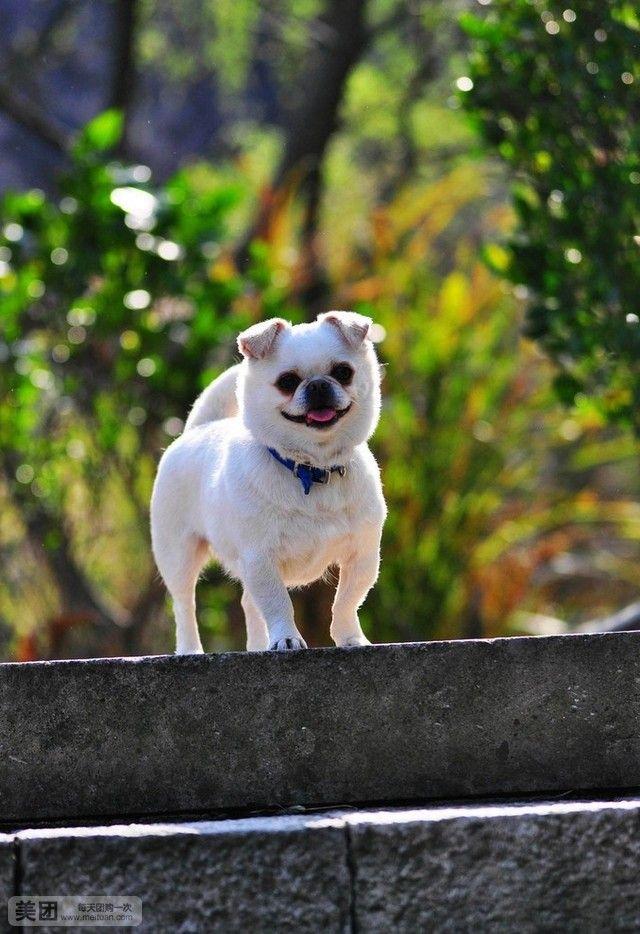 【北京思威国际动物医院团购】思威国际动物医院狗狗