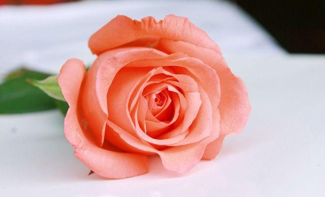 【欣欣美食】欣欣鲜花玫瑰花1支,南二环朱雀花天下鲜花糕黑芝麻图片