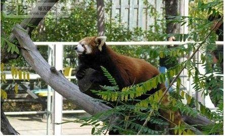沈阳棋盘山动物园门票
