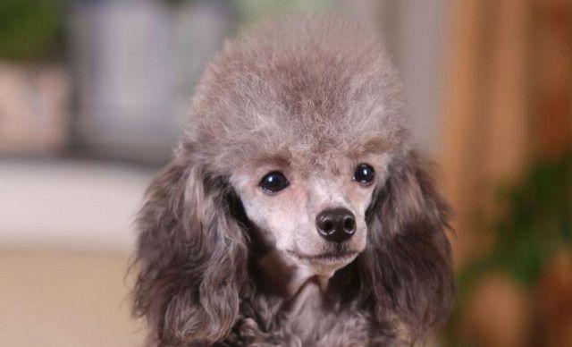 欢乐堡宠物俱乐部小型犬寄养,仅售15元!价值20元的小型犬寄养1天,提供免费WiFi。有事外出担心小宝贝没人照料?来宠物俱乐部,让您的宝贝如同在自己家一样。