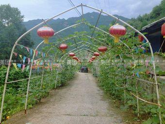 太岳山庄采摘园