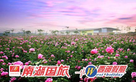 从化宝趣玫瑰世界一日游,漫步花的世界,浪漫的海洋