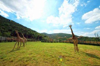 【太湖学院】无锡动物园·太湖欢乐园成人票-美团