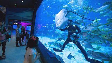 【滨海路】烟台海昌鲸鲨海洋公园-美团