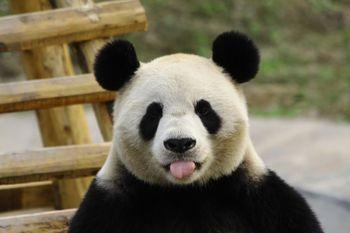 【阆中市】阆中熊猫乐园门票(成人票)-美团