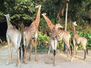 【钟村】香江野生动物世界-美团