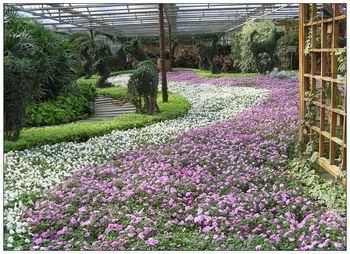 【草桥/公益西桥】北京世界花卉大观园-美团