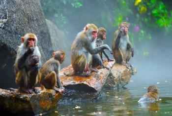 【陵水县】南湾猴岛门票(含观光缆车)(成人票)-美团