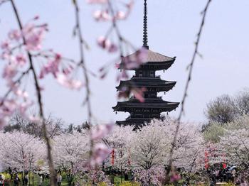 【东湖风景区】东湖磨山樱花节成人票-美团