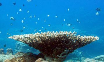【大东海度假区】百乐国际潜水堡礁潜水成人票-美团