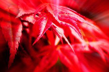 【重庆出发】五洲园纯玩1日跟团游*巴南五洲园赏红枫啦-美团