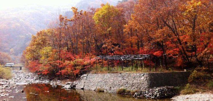 壁纸 枫叶 风景 红枫 树 740_350