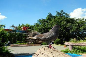 【定安县】海南热带飞禽世界门票(成人票)-美团