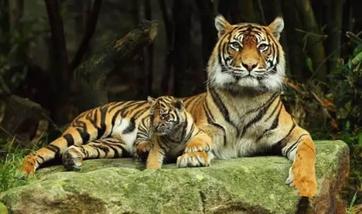 【埇桥区】宿州野生动物园门票双人票-美团