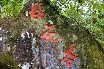【腾冲县】樱花谷森林温泉风景区门票+温泉门票(成人票)-美团