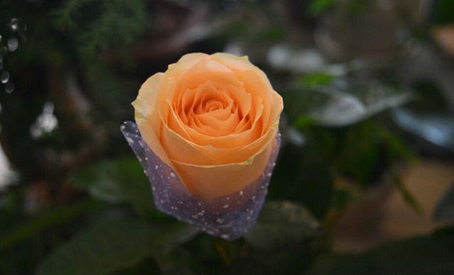 qq头像一支玫瑰花黑白