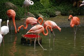 【丰南区】天鹅湖动物乐园门票(成人票)-美团