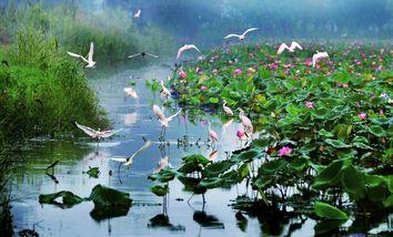 【微山县】微山湖湿地公园成人票+观光车票+竹筏票-美团