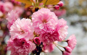 【电白区】茂名罗曼园霓虹樱花园-美团