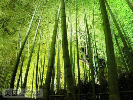 风景 森林 植物 桌面