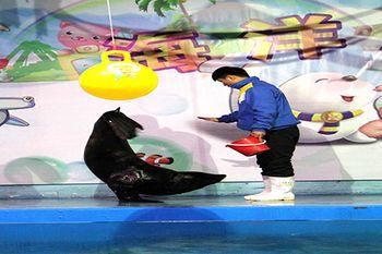 【嘉年华】蚌埠海贝海洋乐园-美团