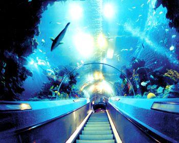 【其它】广州海洋馆门票+广州动物园门票(成人票)-美团