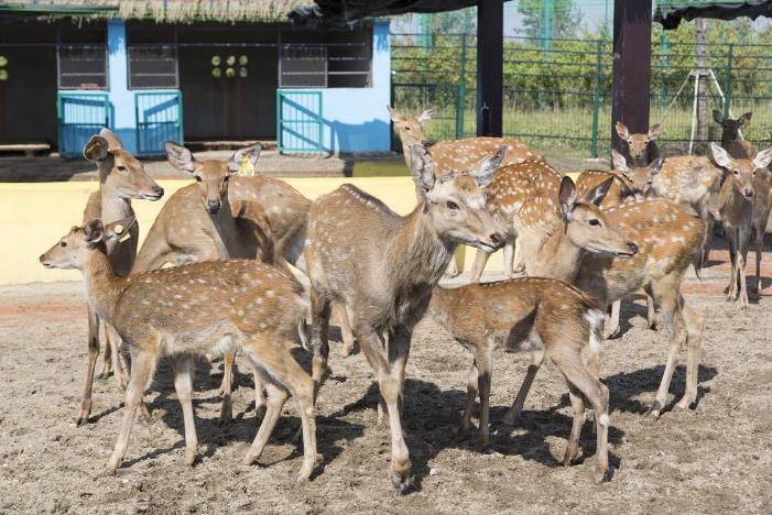 溱湖野生动物园双人票